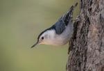 Exotic birds of the Pantanal