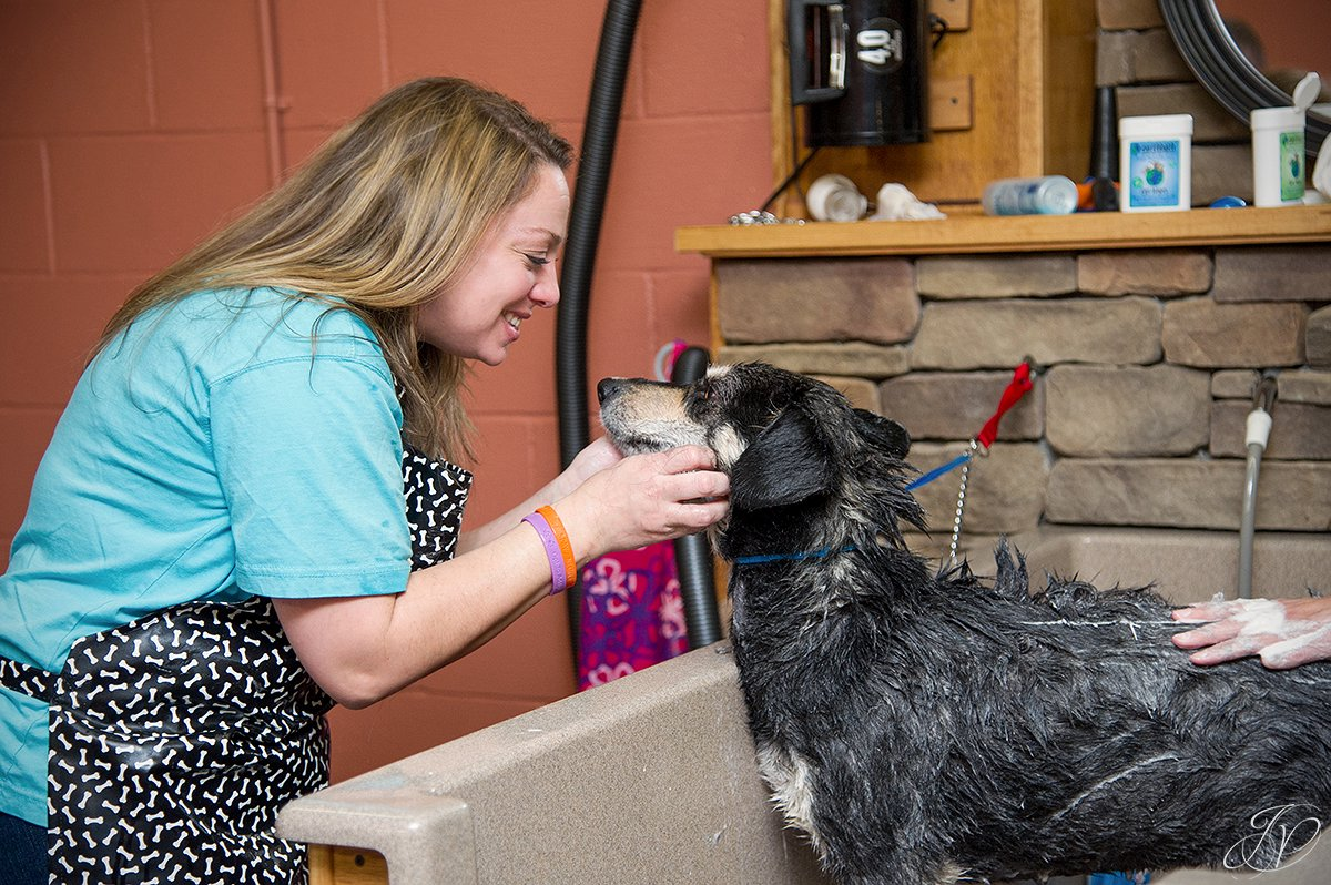 loving a dog in the bath, Dog getting bath, bathing a dog photo, harveys home garden and pet center, canine skin disease, regional animal shelter