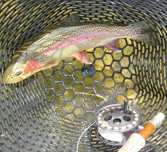 backcountry wade fishingt