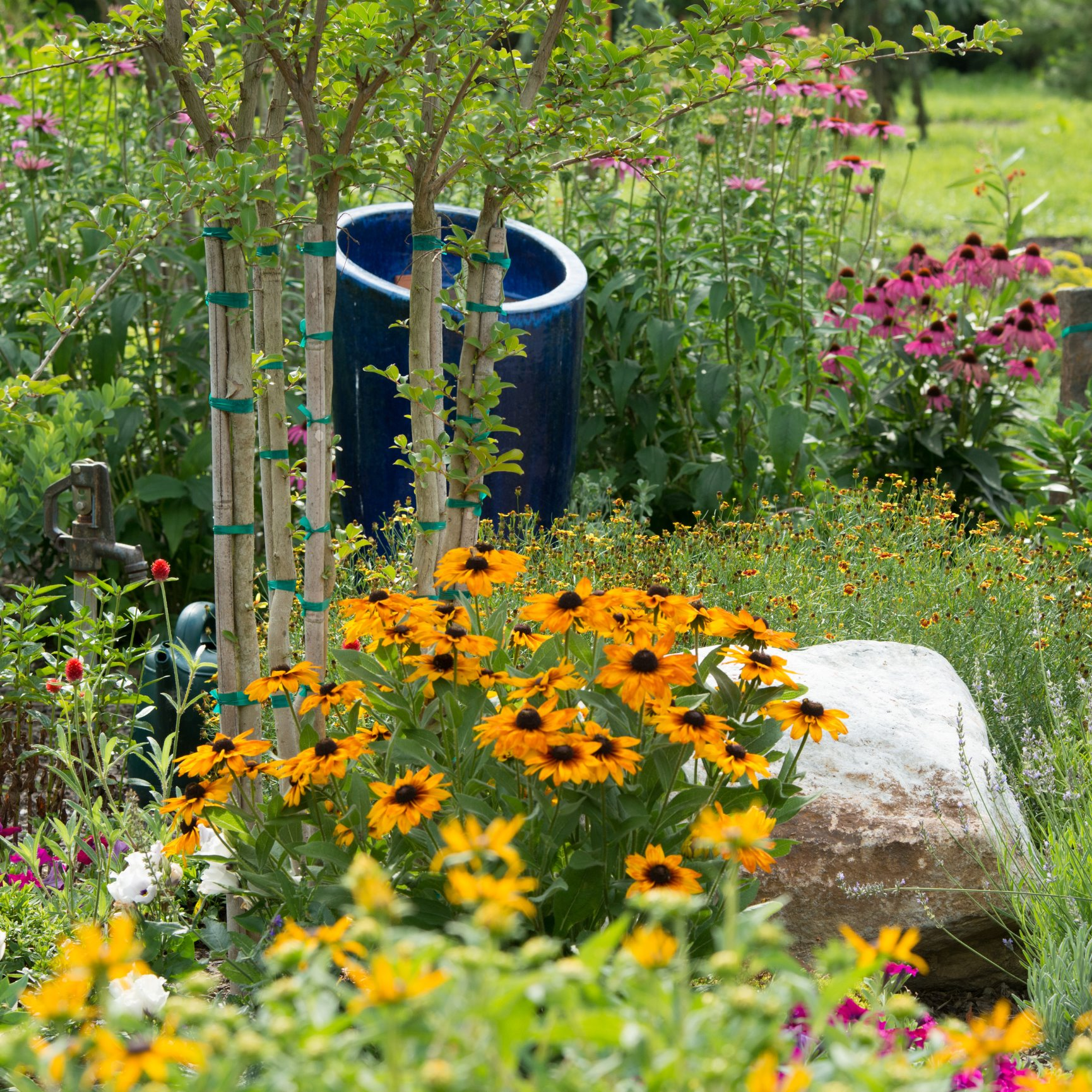 Jean Specifically Designed The Monarch Way Station For Monarchs But  Encourages Other Butterflies, Bees And Hummingbirds Too. The Watch For  Caterpillars On ...