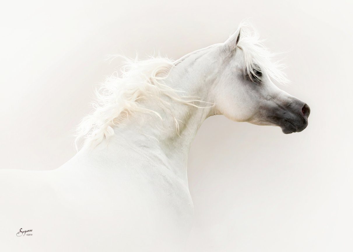 Testimonials Equine Photography By Suzanne Inc