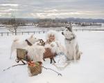 Calendar Dogs & Co. 2020
